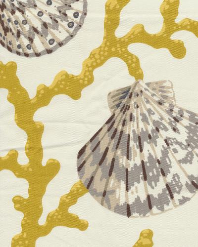Sea Shell Branch