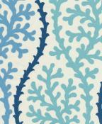 Coral Splender