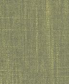 orissa-seagrass.jpg